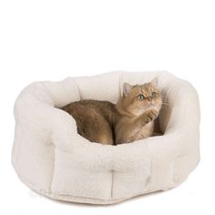 Comes with an extra tall quilted edge and a separate mattress. Size 57 x 46 Hight 22 cm Clamp, Snuggles, Cuddling, Bean Bag Chair, Luxury, Pets, Cat Stuff, Asheville, Model