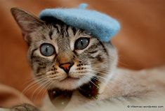 Because Cats Weren't Pretentious Enough Already: Cat French Berets