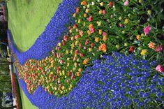 Keukenhof Garden - Holland Stepping Stones, Holland, Beautiful Places, Garden, Outdoor Decor, Home Decor, The Nederlands, Stair Risers, Garten
