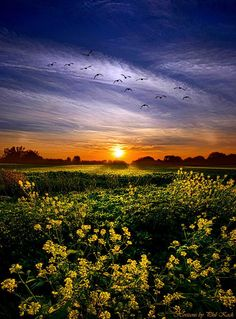 The Space Between by Phil Koch