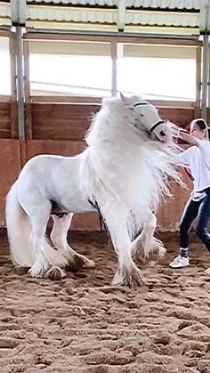 Beautiful Horse Pictures, Beautiful Horses, Nature Pictures, Animals Beautiful, Cute Baby Animals, Funny Animals, Car Rider, Funny Minion Videos, Photo Animaliere
