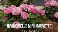 Peonies And Hydrangeas, Proven Winners, Plant Species, Mini, Garden, Flowers, Plants, Peony, Garten