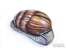 Snail hand painted on a stone by Ernestina Gallina, Pietrevive. https://www.facebook.com/pietrevive.ernestina