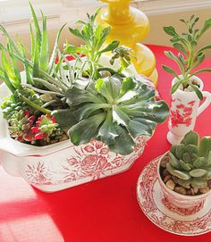 Use hand-me-down china and succulents to create a quirky indoor garden with a vintage touch. Get the tutorial from A Cultivated Nest »   - HouseBeautiful.com