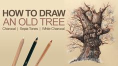 How to Draw an Old Tree - Charcoal and Sepia Tones