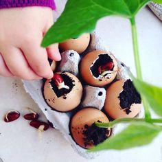 Madre e hija producen plántulas en cáscaras de huevo y las regalan