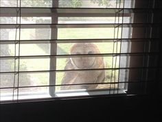 From Anonymous user:   Mr Whooo Owl  While walking around our home my husband saw this owl having dinner on our windowsill on the second floor. Looking from our bedroom window we got this amazing photo.