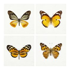 40% OFF - Four 5x5 Butterfly Photographs, Tangerine Orange, Nature Photography, Spring, Pumpkin, Black, Wall Art - The Butterfly Effect