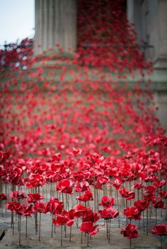 Weeping Window poppies at St Georges Hall. Flickr image by Val Anderson