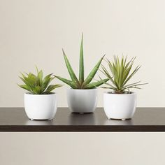 3 Piece Faux Southwest Succulent Set