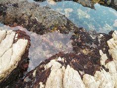 Explore the tide pools tucked away along Monterey's coastline