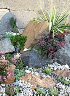Succulents are extremely simple to propagate. They are mostly desert plants and can tolerate a lot of sunlight. Freshly planted succulents or propagat. Succulent Rock Garden, Succulent Landscaping, Succulent Gardening, Landscaping With Rocks, Succulents Garden, Backyard Landscaping, Plants For Rock Garden, Rock Garden Art, Black Rock Landscaping
