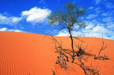 Wahiba Sands - Experience in desert