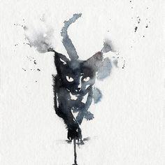 Don James's cat – Blule, The Boutique