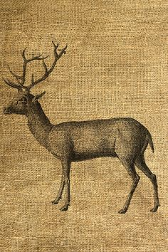 This listing is for one 8.5 X 11 digital sheet with 1 image of a deer. Actual image size is about 8 X 8.5 on a 300 dpi jpeg file. This image looks vintage