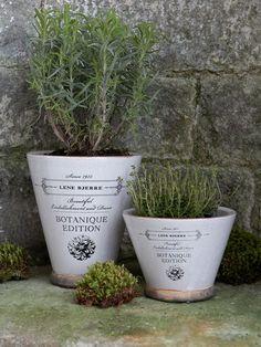 Nordic House: Botanique Plant Pot - Old White