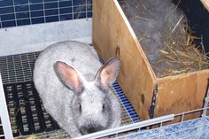 Nesting Boxes in Cages and its Benefits Rabbit Nesting Box, Nesting Boxes, New Zealand Rabbits, Rabbit Colors, Raising Rabbits, Rabbit Cages, Nest Box, Bunny, Genetics