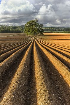 A soothing sight of a well ploughed field... Precision at it's best. At #TAFE our philosophy is 'Cultivating the World', such wonderful images give us immense joy. tafe.com | tafecafe.org