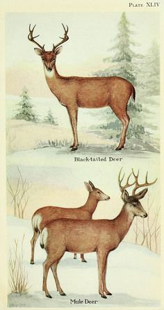 n638_w1150 by BioDivLibrary, via Flickr