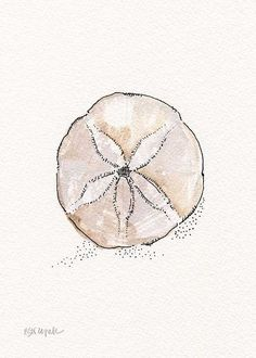 Whelk Conch Shell Watercolor Black Ink by EricaDaleStrzepek