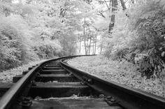 Ultragreen Vienna  #infrared #donaupark #trees #tracks #railway