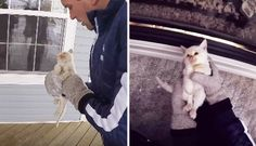 family finds a frozen kitten and brings it back to life