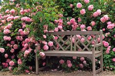 Garden photographer, Saxon Holt, shows how to photograph roses