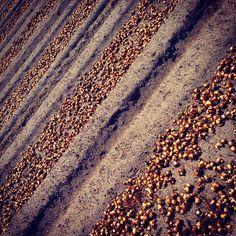 Fluwel's Tulpenland #Blumenzwiebeln #bulbs #fluwel #fluwelstulpenland www.fluwelstulpenland.de