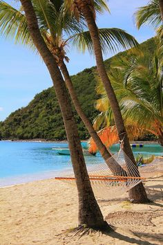 White Bay, Jost Van Dyke, British Virgin Islands, while snorkeling here I found a baby nurse shark and swam with it  : )