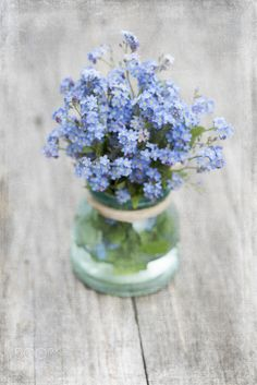 Forget-me-not - null