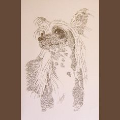Chinese Crested Dog art drawn from the words Chinese Crested Dog by artist Stephen Kline offered on Etsy by seller drawDOGS