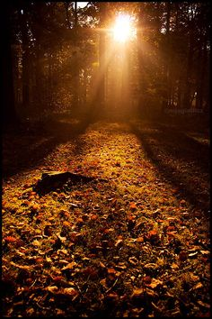 Fall carpet by mjagiellicz on DeviantArt