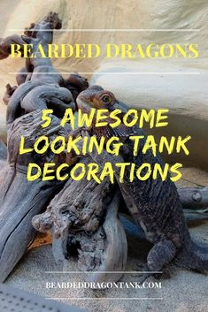 Bearded Dragon Cage Decor - 5 Awesome Things You Need! Bearded Dragon Tank Setup, Bearded Dragon Lighting, Bearded Dragon Vivarium, Bearded Dragon Enclosure, Bearded Dragon Terrarium, Bearded Dragon Funny, Bearded Dragon Cage, Bearded Dragon Habitat, Dragon Facts