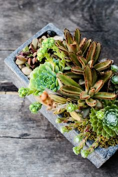 A mix of easy-care succulents in a concrete window box container. Growing Succulents, Succulents In Containers, Cacti And Succulents, Planting Succulents, Planting Flowers, Air Plants, Garden Plants, House Plants, Succulent Gardening