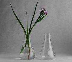 Erlenmeyer Flasks As Vases
