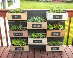 Last year's growing season was surprisingly a success. I decided this year to make my wall planter into an herb garden. I made painted plywood labels and screwed them into each box. O… herb garden diy wall vertical planter Herb Garden Planter, Herb Garden Design, Diy Herb Garden, Herb Planters, Garden Boxes, Balcony Garden, Herb Gardening, Herbs Garden, Organic Gardening