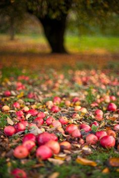 Farmhouse Touches — syflove:   apples