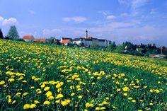 Stadt Ochsenhausen - Welcome to Ochsenhausen