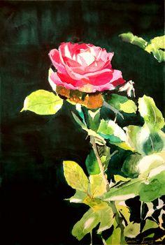 Rose fushia au soleil