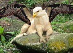 Griffin...Mystical creature of the forest , if you wish hard enough and believe strong enough, you may get a climse of him......
