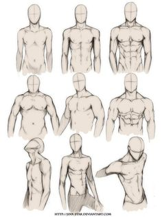 Male torso - drawing reference
