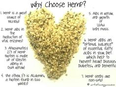 Hemp seeds are used for a wide variety of purposed and are a powerhouse of nutrition for the body. Discover 9 reasons to use hemp seed in your diet today. Hemp Protein, Protein Diets, Plant Protein, Hemp Hearts, Heart Healthy Recipes, Healthy Foods, Healthy Tips, Healthy Treats, Going Vegetarian