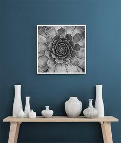 Cactus plant, posters