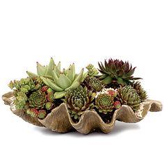 Coastal organic: clamshell planter