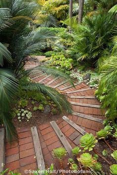 Tropical foliage drapes brick path steps