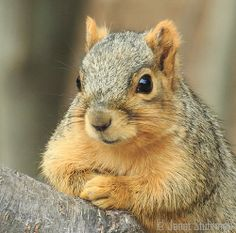 such a polite looking little squirrel!