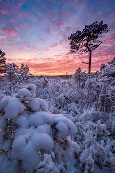 Winter magic, Estonia