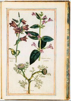 """Illustrations de """"Le Jardin du très chrestien Henri IV"""" - 1608 - Bibliothèque Nationale de France Paris"""