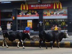 この牛がマクドナルドの、、、