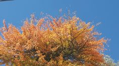 Autumn has so many various colours